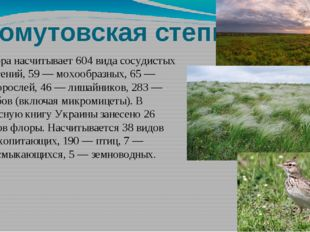 Хомутовская степь Флора насчитывает 604 вида сосудистых растений, 59— мохооб
