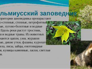 Кальмиусский заповедник На территории заповедника произрастают лугово-степные