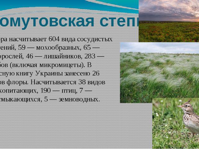 Хомутовская степь Флора насчитывает 604 вида сосудистых растений, 59— мохооб...