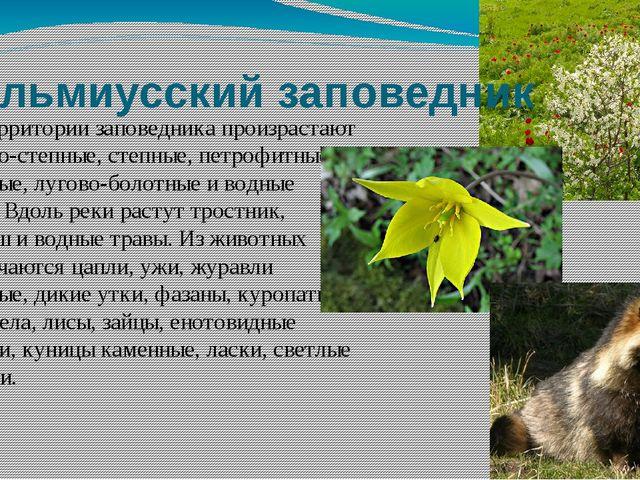 Кальмиусский заповедник На территории заповедника произрастают лугово-степные...