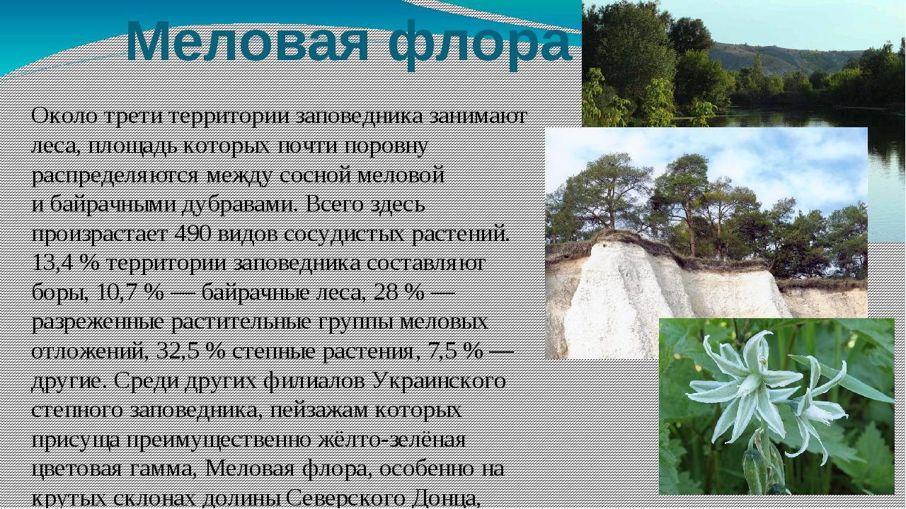 Меловая флора Около трети территории заповедника занимают леса, площадь котор...