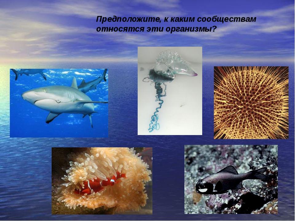 Предположите, к каким сообществам относятся эти организмы?