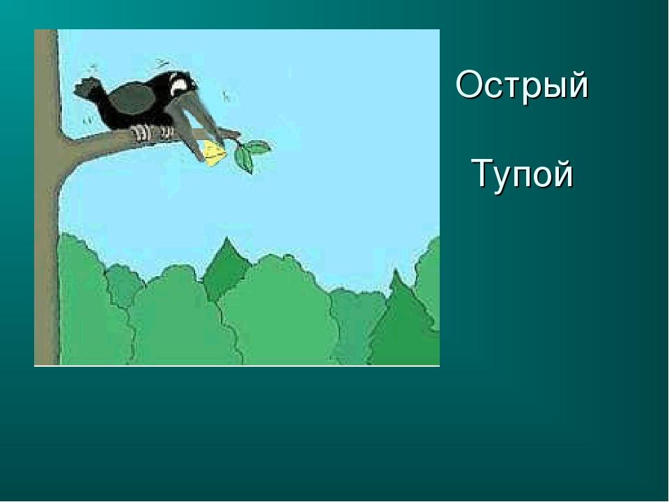 Острый Тупой
