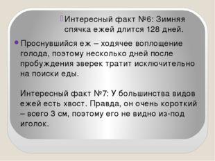 Интересный факт №6: Зимняя спячка ежей длится 128 дней. Проснувшийся еж – хо