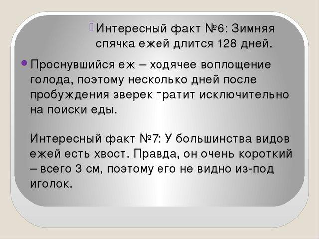 Интересный факт №6: Зимняя спячка ежей длится 128 дней. Проснувшийся еж – хо...