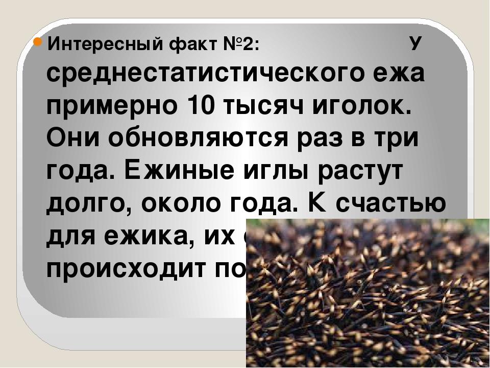 Интересный факт №2: У среднестатистического ежа примерно 10 тысяч иголок. Он...