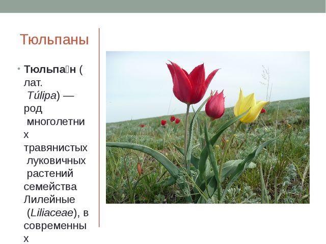 Тюльпаны Тюльпа́н(лат.Túlipa)—родмноголетних травянистыхлуковичныхраст...