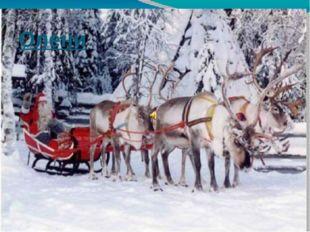 Олени А ведь Санта-Клаус запрягает в рождественские сани не оленей, а олених!