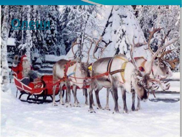 Олени А ведь Санта-Клаус запрягает в рождественские сани не оленей, а олених!...
