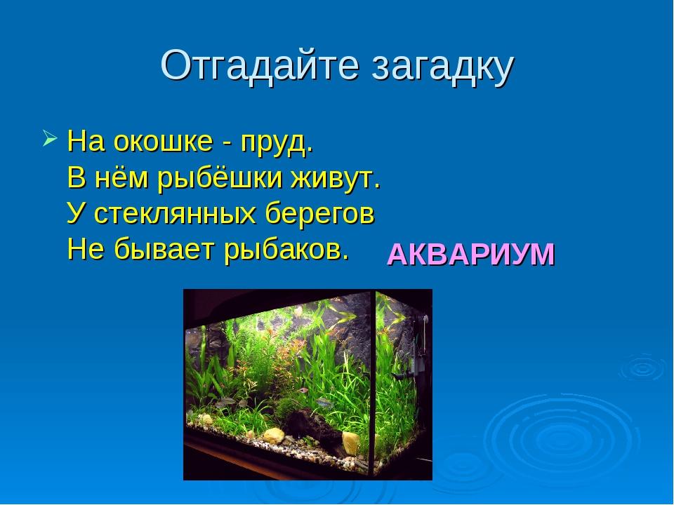 Отгадайте загадку На окошке - пруд. В нём рыбёшки живут. У стеклянных берегов...