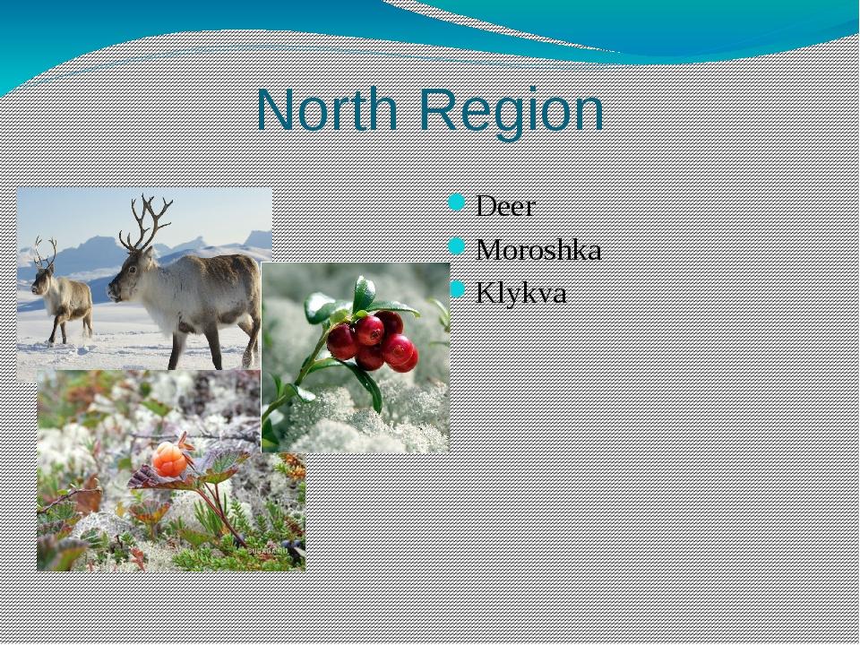 North Region Deer Moroshka Klykva