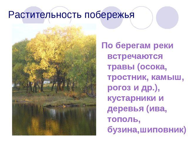 Растительность побережья По берегам реки встречаются травы (осока, тростник,...