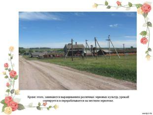 Кроме этого, занимаются выращиванием различных зерновых культур, урожай сорти