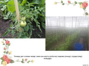 Теплица дает зеленые овощи, такие как капуста (кубиста), морковь (кешыр), огу