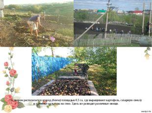 За двором располагается огород (бакча) площадью 0,5 га, где выращивают картоф