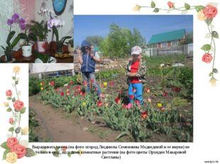Выращивать цветы (на фото огород Людмилы Семеновны Медведевой и ее внуки) не