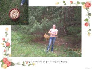 Собирать грибы опята (на фото Гиниятулина Марина).