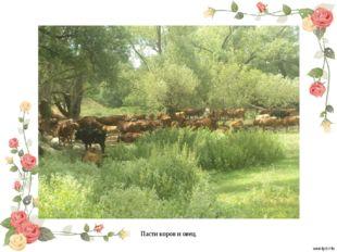 Пасти коров и овец.