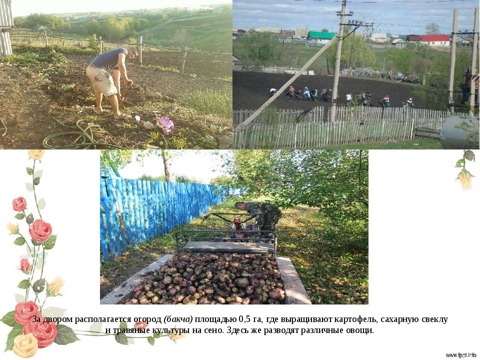 За двором располагается огород (бакча) площадью 0,5 га, где выращивают картоф...