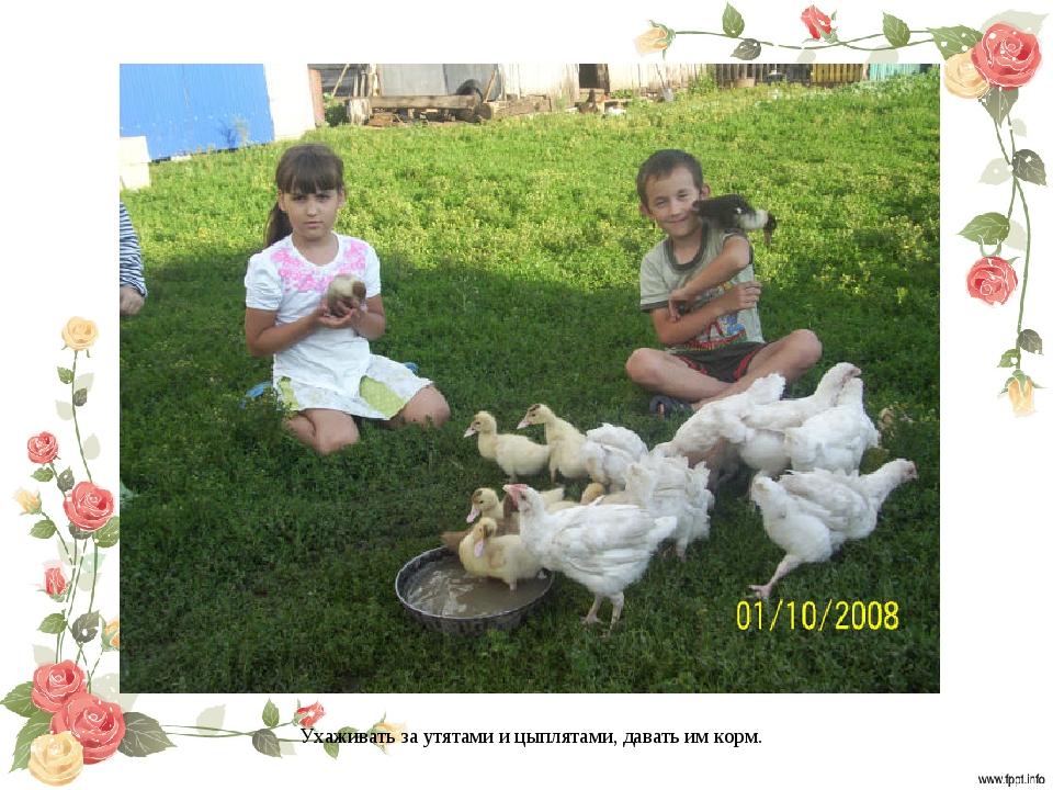 Ухаживать за утятами и цыплятами, давать им корм.