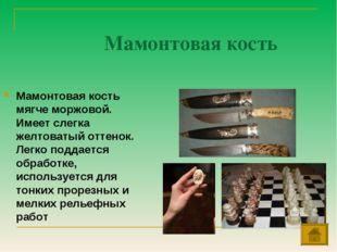 Мамонтовая кость Мамонтовая кость мягче моржовой. Имеет слегка желтоватый отт