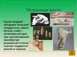Моржовая кость Клыки моржей – обладают большой твердостью, имеют белый, слабо