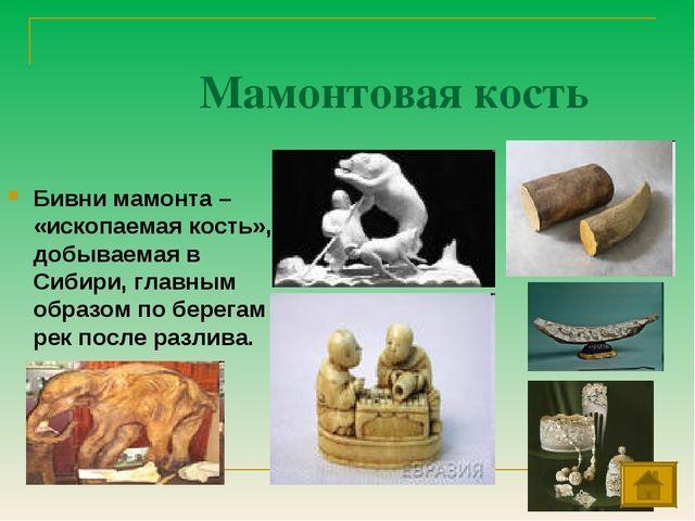 Мамонтовая кость Бивни мамонта – «ископаемая кость», добываемая в Сибири, гла...