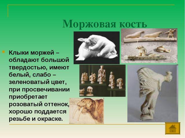 Моржовая кость Клыки моржей – обладают большой твердостью, имеют белый, слабо...