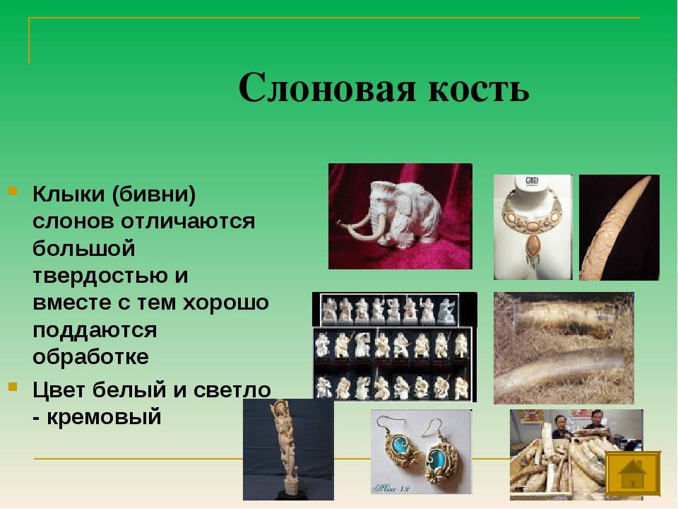 Слоновая кость Клыки (бивни) слонов отличаются большой твердостью и вместе с...