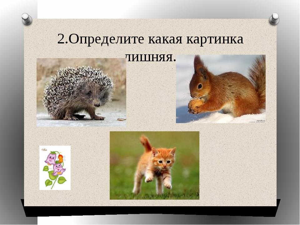 2.Определите какая картинка лишняя.