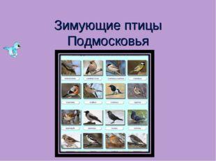 Зимующие птицы Подмосковья