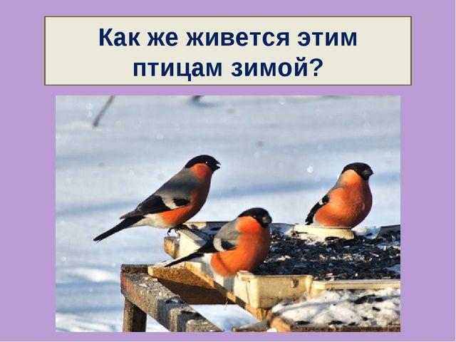 Как же живется этим птицам зимой?