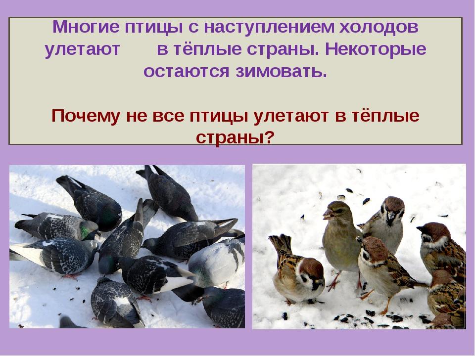 Многие птицы с наступлением холодов улетают в тёплые страны. Некоторые остают...