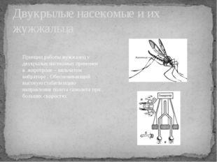 Двукрылые насекомые и их жужжальца Принцип работы жужжалец у двукрылых насеко