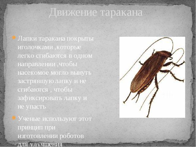 Движение таракана Лапки таракана покрыты иголочками ,которые легко сгибаются...
