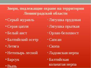 Звери, подлежащие охране на территории Ленинградской области Серый журавль Се