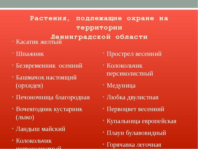 Растения, подлежащие охране на территории Ленинградской области Касатик желты...