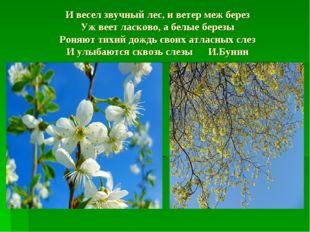 И весел звучный лес, и ветер меж берез Уж веет ласково, а белые березы Роняют