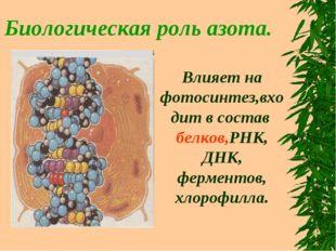 Биологическая роль азота. Влияет на фотосинтез,входит в состав белков,РНК, ДН