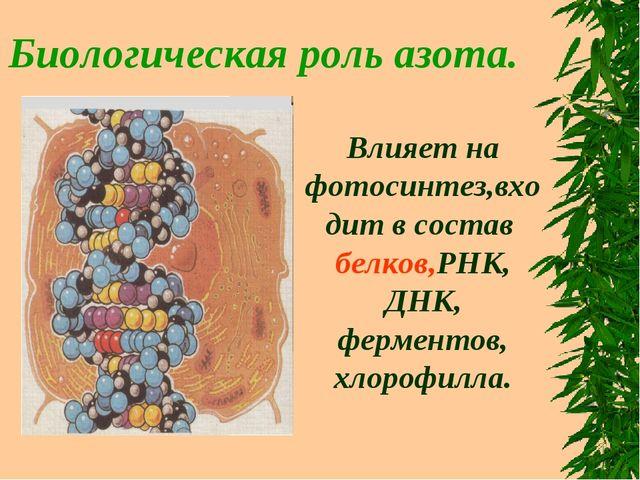 Биологическая роль азота. Влияет на фотосинтез,входит в состав белков,РНК, ДН...