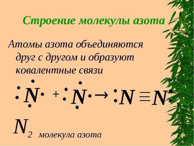 Строение молекулы азота Атомы азота объединяются друг с другом и образуют ков...