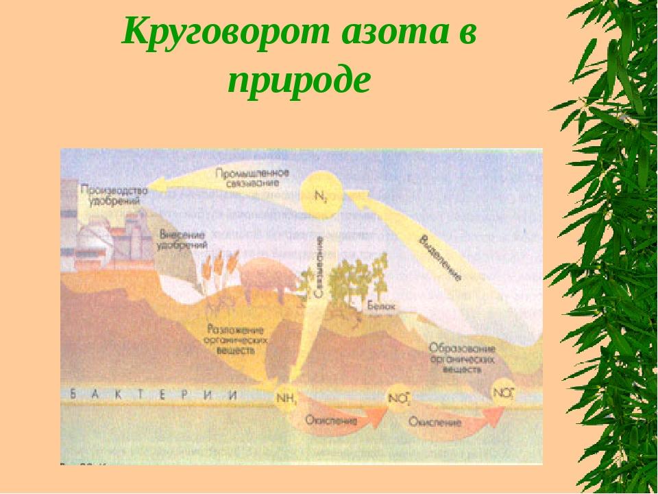 Круговорот азота в природе