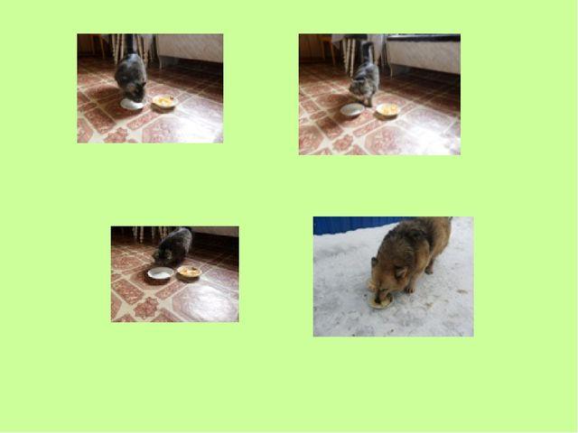 1. Кошке в одну тарелку положила чипсы, а в другую- вареный рис.