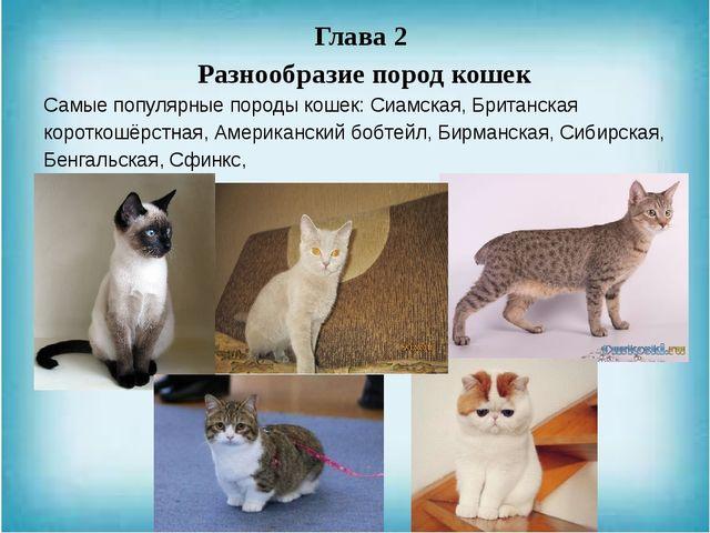 Глава 2 Разнообразие пород кошек Самые популярные породы кошек: Сиамская, Бри...