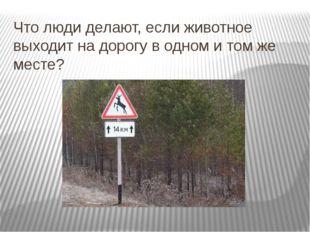 Что люди делают, если животное выходит на дорогу в одном и том же месте? На о