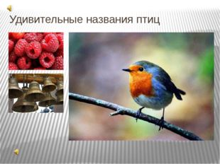Удивительные названия птиц Одно из своих названий эта птица получила, судя по