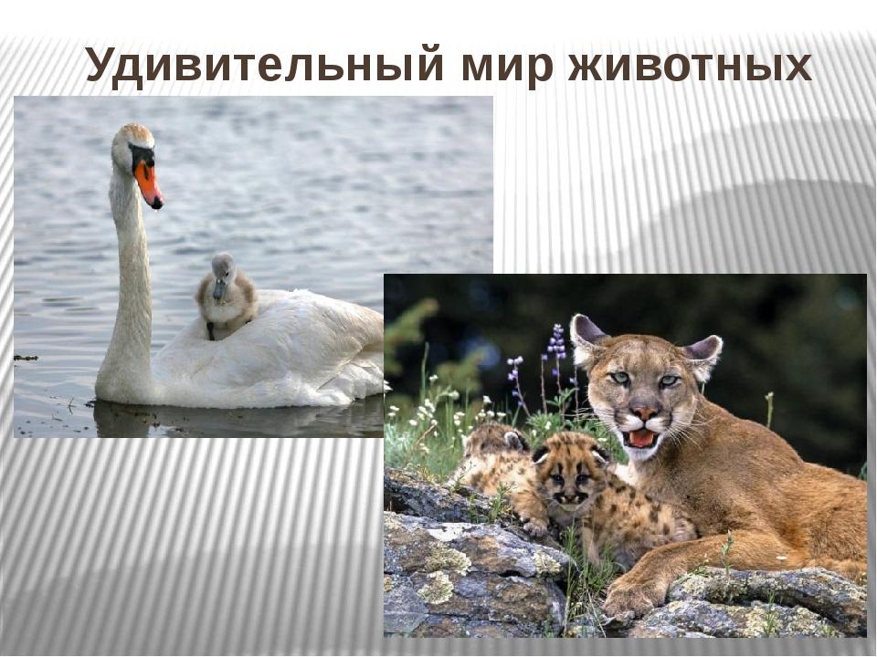 Удивительный мир животных Вступительное слово. В одной из замечательных песен...