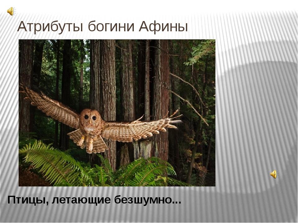 Атрибуты богини Афины Птицы, летающие безшумно... Эти птицы была спутницей и...