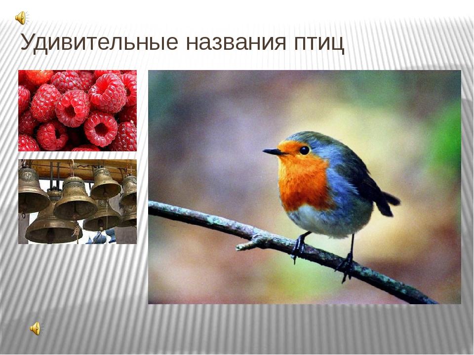 Удивительные названия птиц Одно из своих названий эта птица получила, судя по...