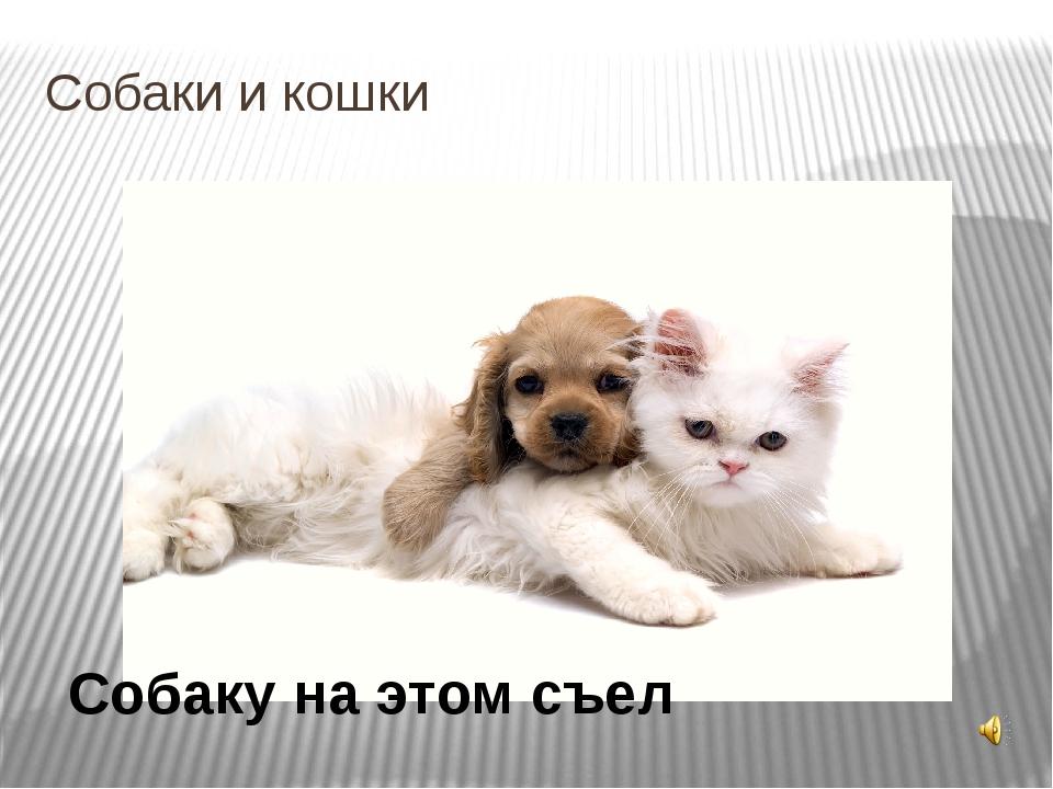 Собаки и кошки Собаку на этом съел Есть такая пословица. В ней говорится о то...